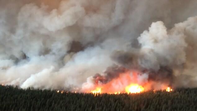 Des flammes et de la fumée au-dessus d'une forêt.
