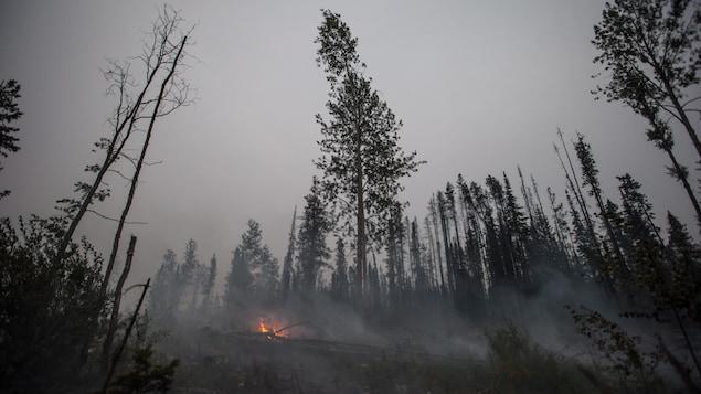 Une foret noircie par le feu, avec quelques flammes brûlant encore.