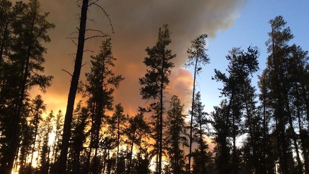Un feu derrière les arbres.