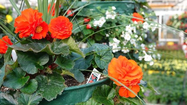 Des fleurs dans un pot.