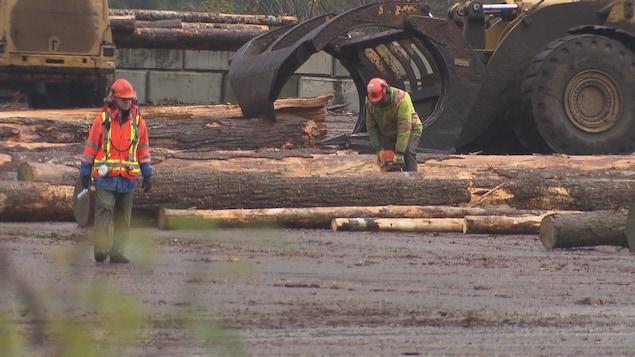 Un bûcheron tranche un tronc d'arbre au sol tandis qu'un tracteur en déplace un autre.