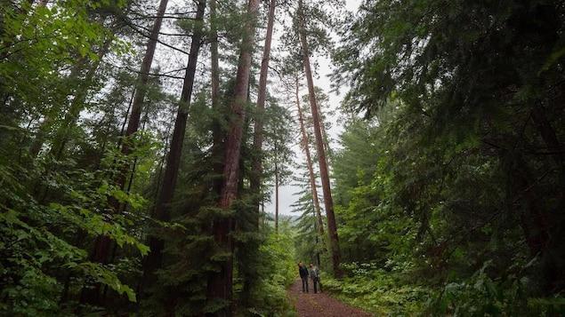 Deux personnes lèvent la tête vers les cimes au beau milieu d'une forêt.