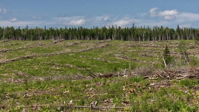 Une terre à reboiser