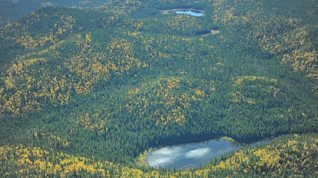 Un massif de forêt vierge identifié par la Nation huronne-wendat.