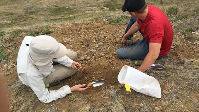 Deux personnes sont assises sur un versant d'une colline. Il tiennent de petites pelles dans leurs mains.