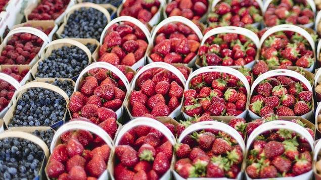 Des petits fruits du Québec