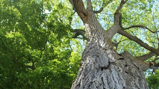 Un grand arbre entouré d'une bannière installée par des manifestants.