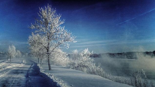 Des arbres enneigés le long d'une route sous un ciel bleu.