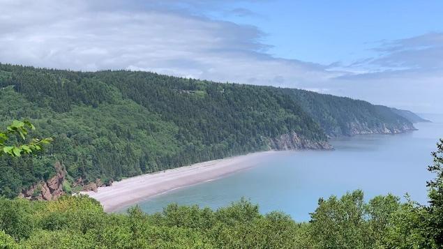 Un paysage époustouflant mêlant forêt et plage.