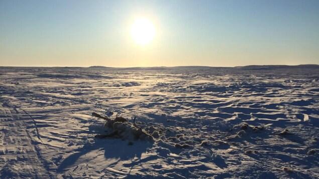 Une carcasse de caribou abandonnée au bord d'une route de glace, sur un lac enneigé, sous un soleil d'hiver.