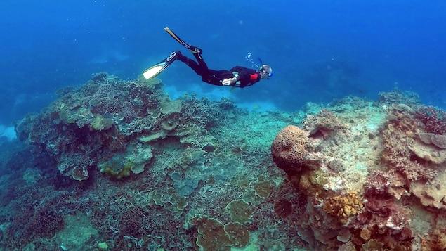 Un homme fait de la plongée dans la Grande Barrière de corail près de l'île Lady Elliot, près de l'État de Queensland en Australie.
