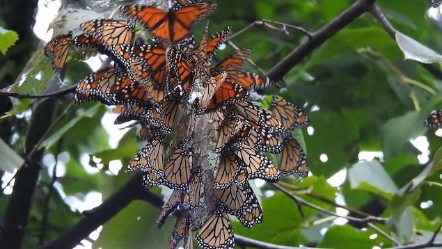 Des papillons sur un arbre.