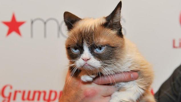 Grumpy Cat est dans les mains d'un homme.