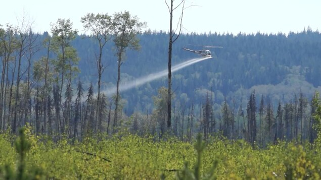 Un hélicoptère répand un produit sur une forêt.
