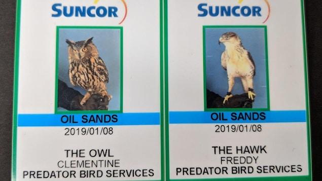 Deux cartes d'employés de Suncor à l'effigie des deux rapaces, un hibou et une buse.