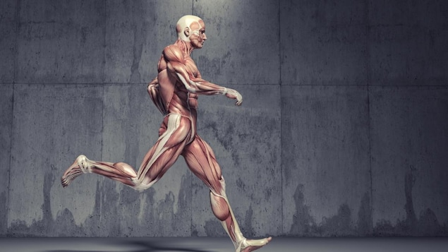 Illustration de la musculature d'un homme qui court.