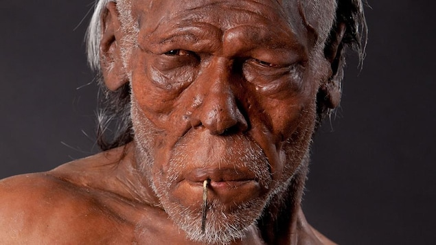 Reconstitution artistique d'un Homo sapiens