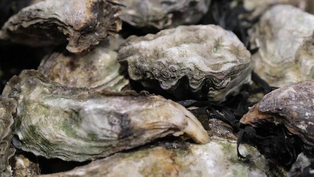 Des huîtres creuses.