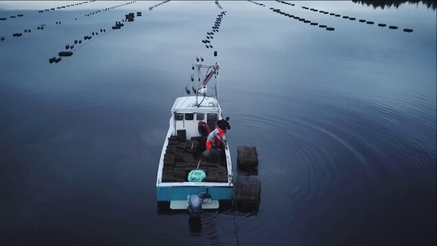 Un bateau avec des cages à huîtres.