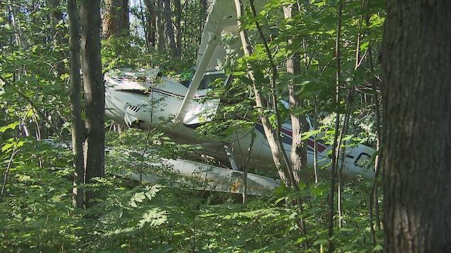 Avion dans le bois