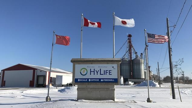 À l'extérieur, soit à l'entrée de l'entreprise HyLife, il y a quatre drapeaux affichés. Celui de le Chine, du Canada, du Japon et des États-Unis.