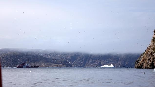Des dizaines d'oiseaux survolent l'île de Hantzsch.