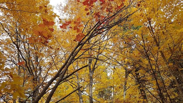 Arbres d'une forêt vus en contre-plongée.