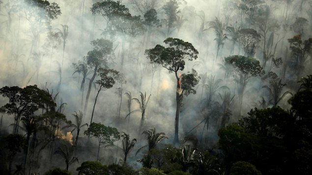 Une forêt avec beaucoup de fumée.