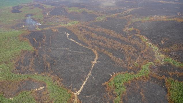Vue aérienne sur des taches de forêt brûlée.On voit des parcelles de forêt qui ne sont pas touchée par l'incendie, mais la majeure partie de l'image est occupée par une forêt incendiée.