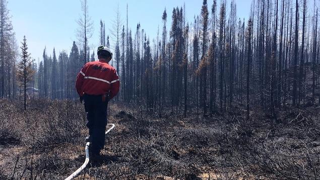 Un pompier dans la forêt brûlée.