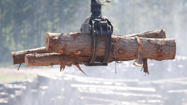 Une grue mécanique déplace des troncs d'arbres coupés.