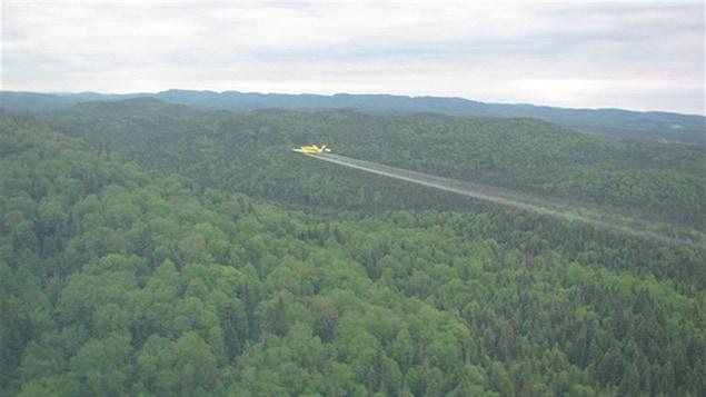 La SOPFIM procède à la pulvérisation aérienne d'insectide biologique sur la forêt commerciale du Québec.