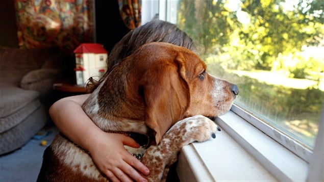 Moins de 5% des propriétaires acceptent les animaux dans leurs logements, selon la SPCA de Montréal.