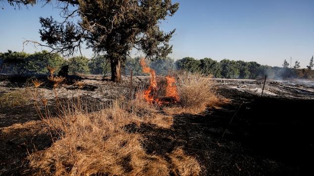 Un feu dans un champ.