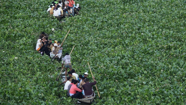 Trois bateaux naviguent sur la rivière qui est complètement couverte de plantes.