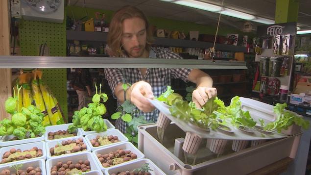 Jackson McLean et son équipe préparent des ateliers de culture hydroponique du cannabis pour aider leurs clients intéressés à faire pousser leur propres plants de marijuana.