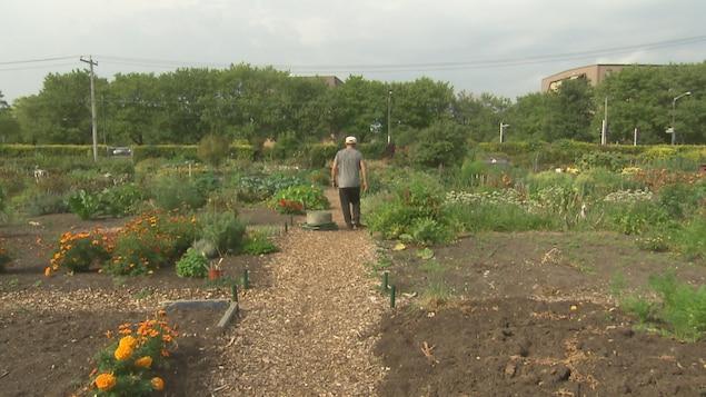 Un citoyen dans un jardin communautaire à Québec.