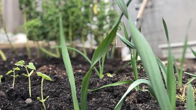 Un jardin avec des jeunes pousses.