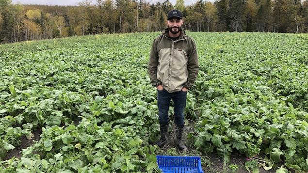 Un homme pose dans un champ de radis.