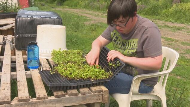 Une travailleuse s'occupe de plantes aux jardins des Herbes salées du Bas-du-Fleuve.