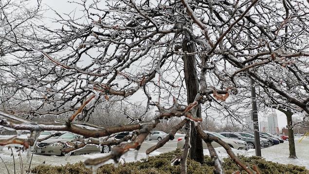 Un arbre couvert de givre.