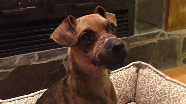 Un chien est dans son panier devant une cheminée.