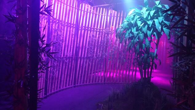 Une salle éclairée en rose, où se trouvent des plantes