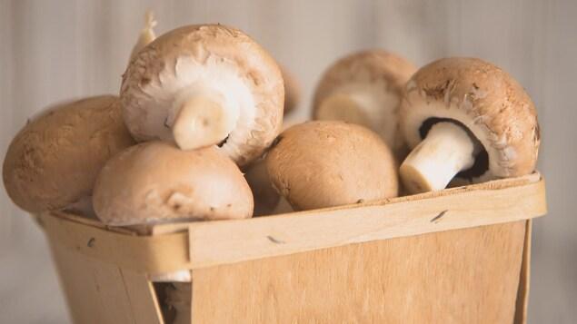 Un panier de champignons blancs