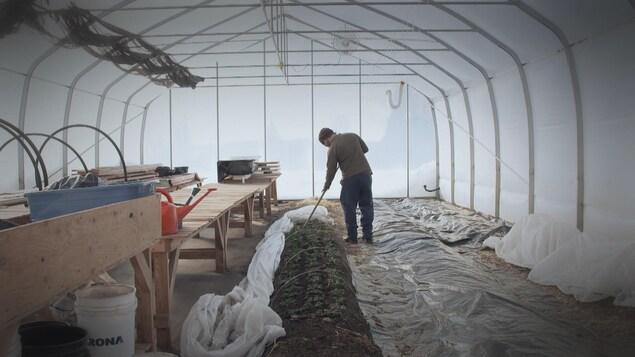 L'entreprise d'Alexandre Guérin, Prendre Racine, se spécialise dans les produits forestiers comestibles.