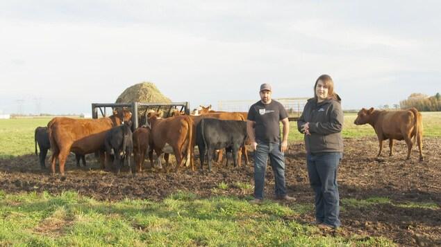Les agriculteurs Joanie Courchesne et Claude Labbé dans leur champ avec leurs bovins.
