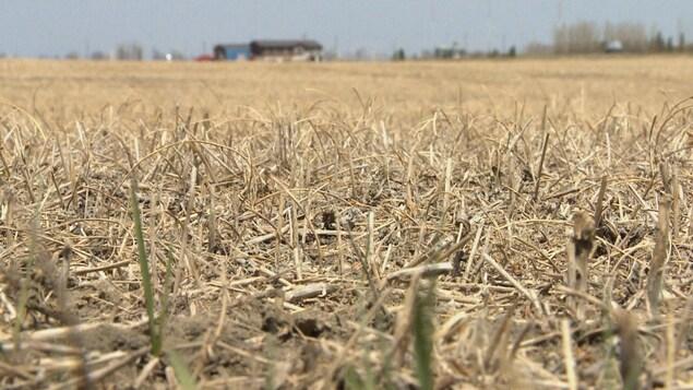 La canicule et la sécheresse de l'été 2021 ont été une catastrophe pour les fermiers et les éleveurs de bétail.