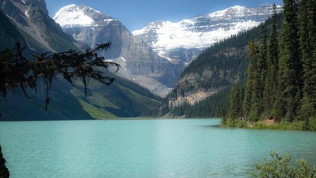 Un lac entouré de montagnes et de grands sapins.