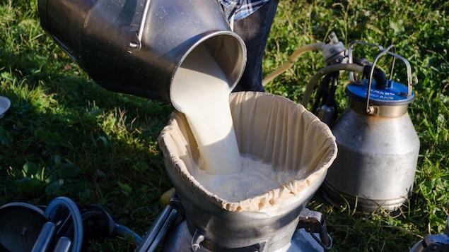 Un fermier verse du lait pour le filtrer dans un bidon