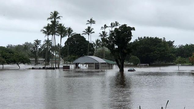 Un paysage tropical inondé. On voit des palmiers, un bâtiments et une voiture dans l'eau.